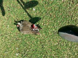The bird left-overs